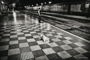 dog on the dock© Christos Tolis