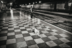 dog on the dock© Christos Tolis