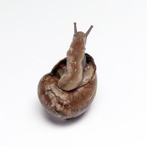 Escargot, 2010 © Marlous van der Sloot