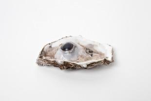 Oyster, 2011 © Marlous van der Sloot