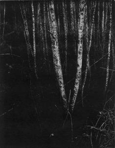 "From the series, ""Ruinaulta"" © Ester Vonplon"