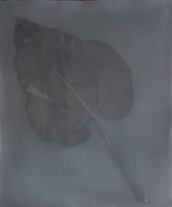 Rhubarb 5