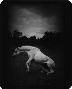 """Untitled"" (Horse Standing Up), 2007"