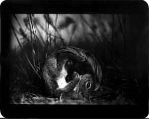 """Untitled"" (Squirrel),2011"