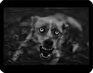 """Untitled"" (Dog), 2006 © Giacomo Brunelli"