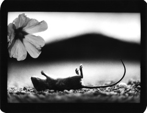 """Untitled"" (Mouse and Flower), 2007 © Giacomo Brunelli"