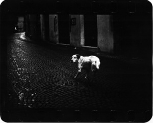 """Untitled"" (Three Legged Dog), 2005 © Giacomo Brunelli"