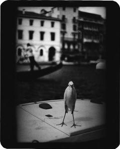 """""""Untitled"""" (Heron Venice), 2007 © Giacomo Brunelli"""
