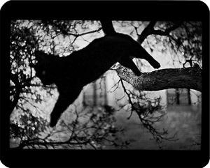 """Untitled"" (Cat Jumping), 2006"
