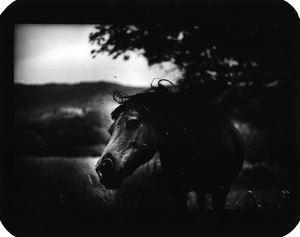 """Untitled"" (Horse Shaking Head), 2006"