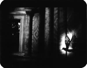 """Untitled"" (Pigeon Venice), 2007 © Giacomo Brunelli"