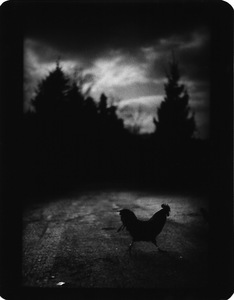 """Untitled"" (Black Cockrel), 2005 © Giacomo Brunelli"