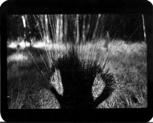 """""""Untitled"""" (Shadow #07), 2011"""