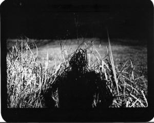 """""""Untitled"""" (Shadow #05), 2011"""