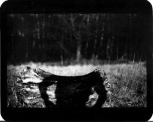 """""""Untitled"""" (Shadow #09), 2011"""