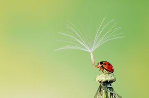 © Hiep Nguyen Hoang, Vietnam, Shortlist, Nature  Wildlife, Open Competition, Sony World Photography Awards 2013