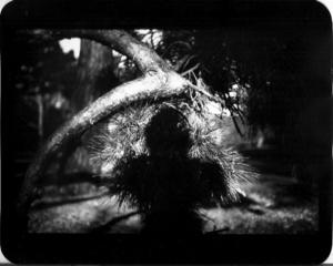 """""""Untitled"""" (Shadow #08), 2011"""