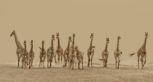 © Frederick van Heerden, South Africa, Shortlist, Nature  Wildlife, Open Competition, Sony World Photography Awards 2013