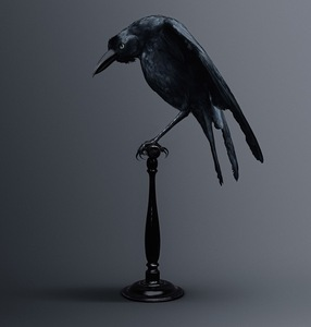 CARRION CROW [Corvus memoria eidetica] Bird of memories