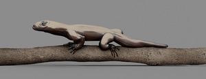 MONITOR LIZARD [Varanus imitabilis] Mimetic lizard