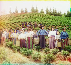 "Group of Workers Harvesting Tea near Chavka, Caucasus, between 1905 and 1915 © Sergei Mikhailovich Prokudin-Gorskii, from the book ""Nostalgia"". Images courtesy US Library of Congress and Gestalten publishers, Berlin."
