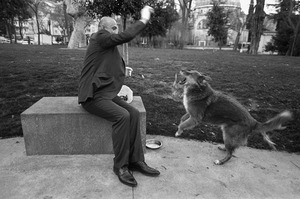 A man feeds a stray dog in a park. No reliable count exists, but according to estimates, the dogs number about one hundred thousand.