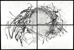 """Nest VIII, 2012                                         24""""h x 36""""w x 1.5""""d                                         archival pigment prints & encaustic on panels                                                    © Christa Bowden"""