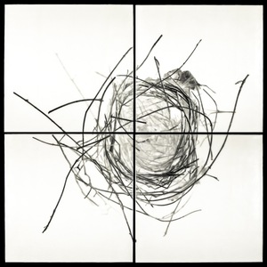 "Nest XVIII, 2012                                      32""h x 32""w x 1.5""d                                                 archival pigment prints & encaustic on panels                                                    © Christa Bowden"