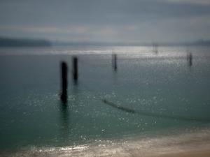 Shark nets, Nielson Park.                               © Ross Duncan