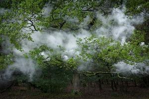 Between the Trees 12© Ellie Davies