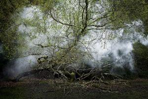 Between the Trees 13© Ellie Davies