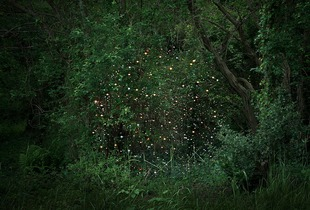 Stars, 2© Ellie Davies