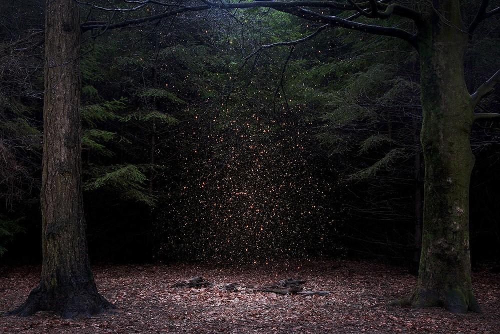 Stars, 8© Ellie Davies