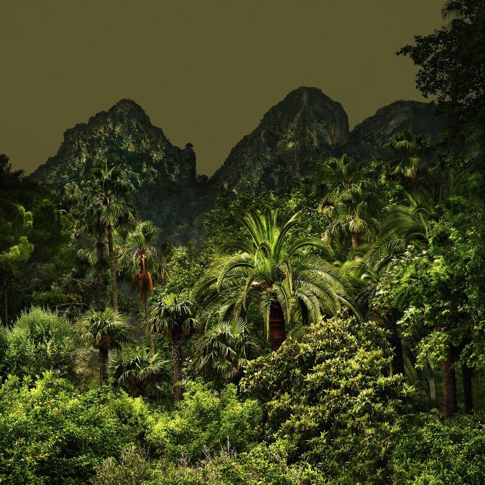 Jungles 02 © Olivia Lavergne