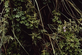 From the series A Secret Garden       © Emma Livingston