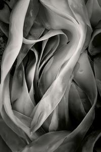 Seaweed 91, Seawall, Maine © Alan Henriksen