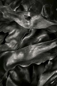 Seaweed 457, Seawall, Maine © Alan Henriksen