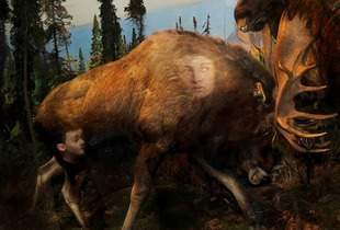 """Moose, from the series """"Natural History"""" © Traer Scott"""