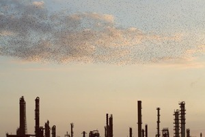 "From the series ""Refinery Flocks"" © Massimo Cristaldi"