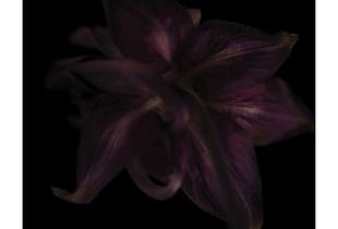'Velvet Black'  from the series, 'Colour from Black'