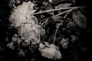Three muses © Rebecca Moseman