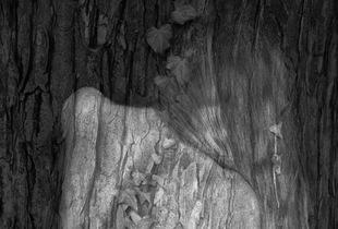 Arbor Essence III