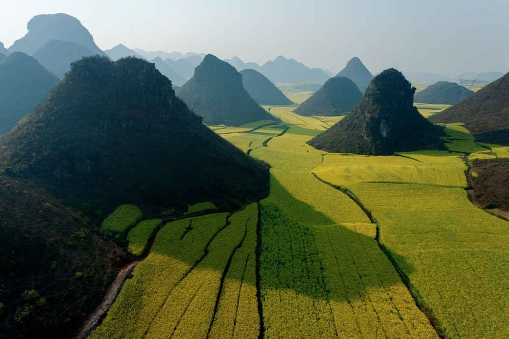 Views of small limestone hills punctuating privately owned fields of rape plants in flower. The rape seed is harvested for cooking oil, the rape stalks are turned into housing insulation, and honey is produced from the flowers by hives of bees brought in by migratory beekeepers. Luoping, China, 2007 © George Steinmetz, National Geographic