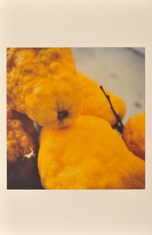 Lemons, Gaeta, 2005, © Cy Twombly