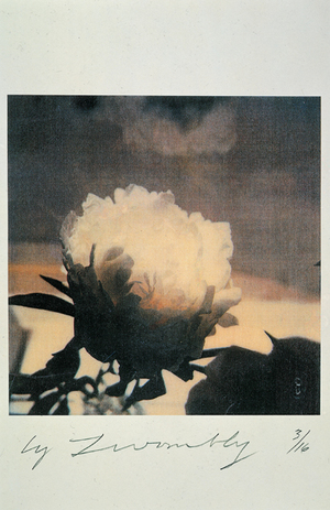 Untitled (peonies), 1980, Courtesy Gagosian Gallery © twombly