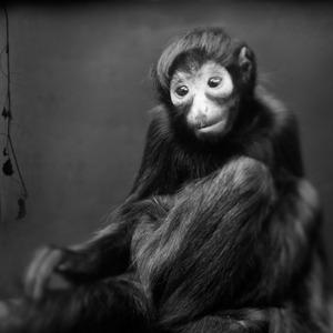 Spider Monkey © Anne Berry