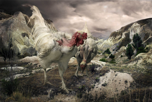 Worms Are Good To Eat, from the series The Chickens of Cappadocia, © Pat Swain. Honorable Mention, Lens Culture International Exposure Awards 2011