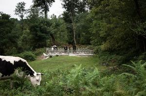 Family grave in the middle of the forest. Eshera village, Abkhazia. © Olga Ingurazova