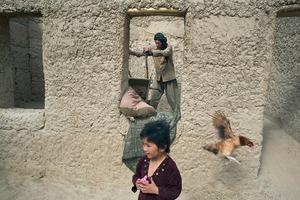 © Iva Zimova. A man building a chicken shed empties a wheelbarrow, disturbing a hen and amusing a child.