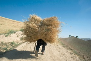 © Iva Zimova. A boy is obscured by the bundle of wheat he carries on his back.